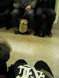 可愛すぎ,袋,鞄,入る,犬,画像-8