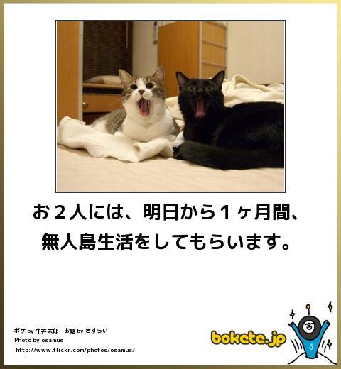 omoshiro515