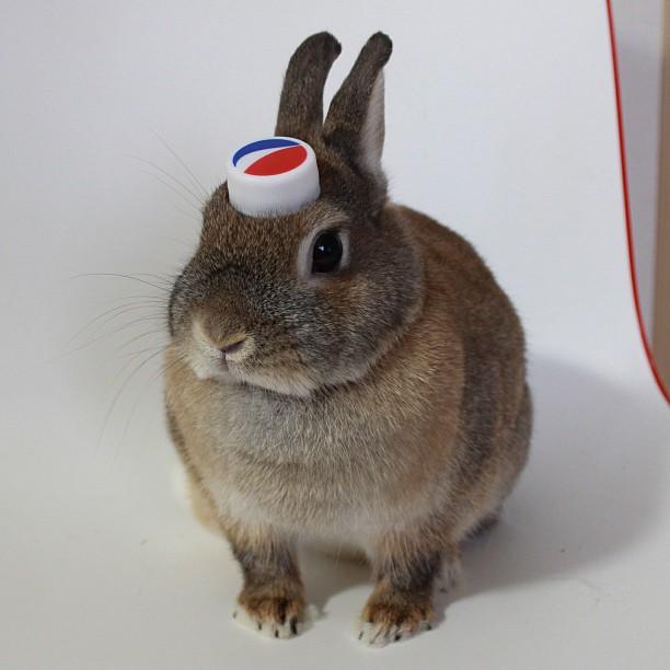 頭の上,物,載せている,ウサギ,可愛すぎる,画像,貼っていく001