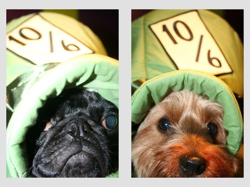 疲れ,飛ぶ,可愛い,犬,画像,貼っていく001