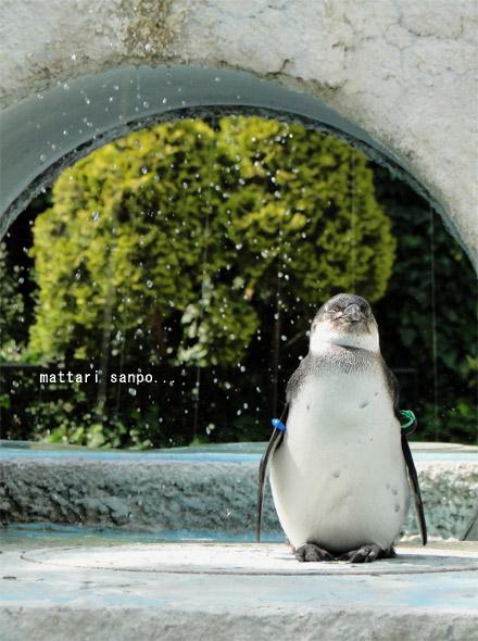 可愛く,悶える,ペンギン,画像,貼っていく001