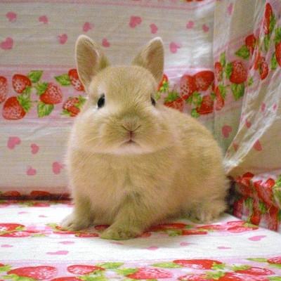 萌え,悶え,可愛すぎ,ウサギ,画像,貼っていく001