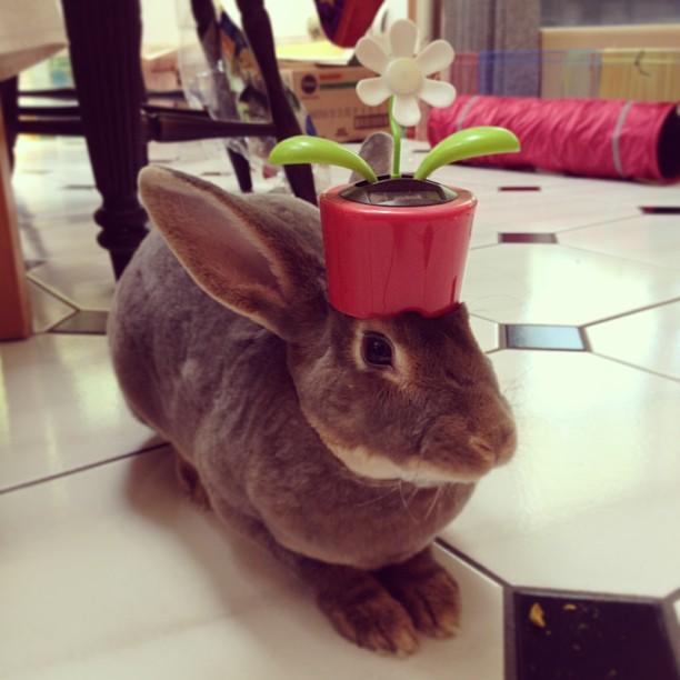 頭の上,物,載せている,ウサギ,可愛すぎる,画像,貼っていく002