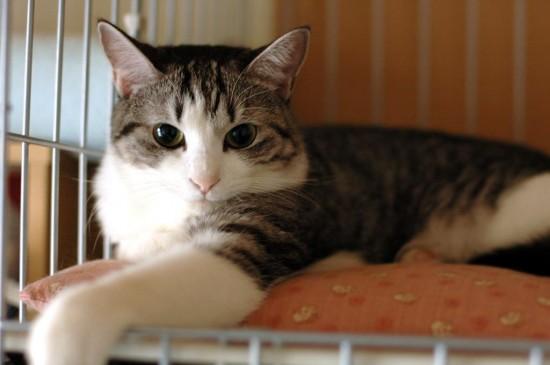 可愛い,猫,画像,貼っていく002