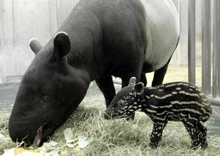 可愛い,動物,赤ちゃん,画像,貼っていく002