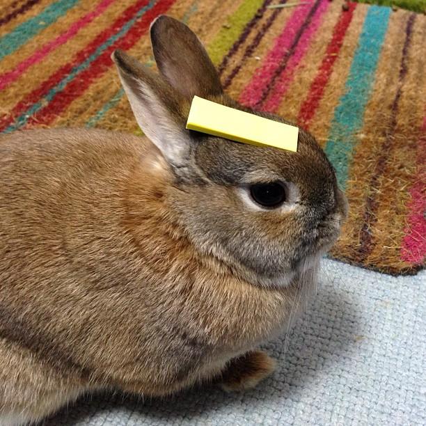 頭の上,物,載せている,ウサギ,可愛すぎる,画像,貼っていく003