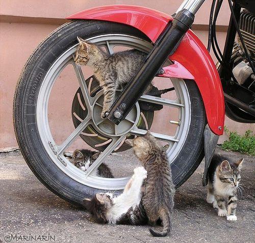 見て,癒され,猫,画像,貼っていく003