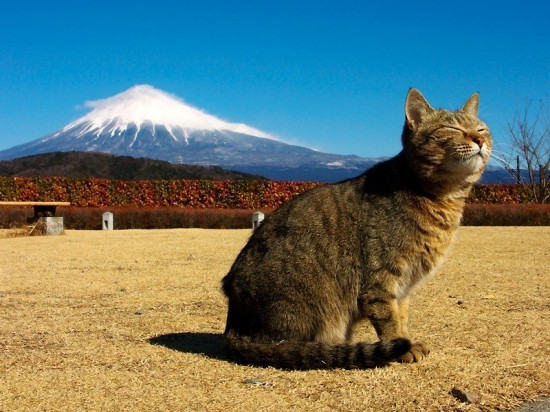 可愛い,猫,画像,貼っていく003