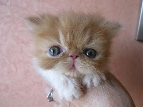 ちょっぴり,ぶち,可愛,猫,画像,貼っていく003
