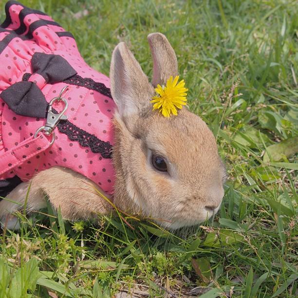 頭の上,物,載せている,ウサギ,可愛すぎる,画像,貼っていく004