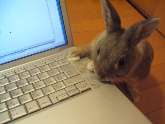 萌え,悶え,可愛すぎ,ウサギ,画像,貼っていく004