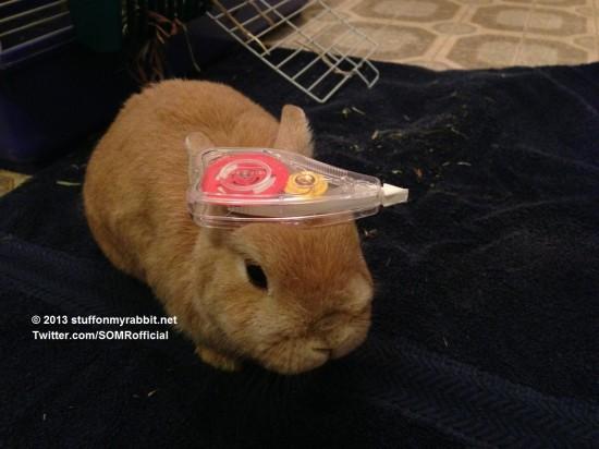 頭の上,物,載せている,ウサギ,可愛すぎる,画像,貼っていく005