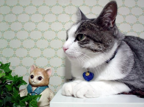 可愛い,猫,画像,貼っていく005