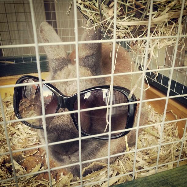 頭の上,物,載せている,ウサギ,可愛すぎる,画像,貼っていく006