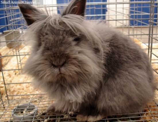 萌え,悶え,可愛すぎ,ウサギ,画像,貼っていく006
