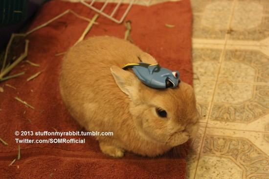 頭の上,物,載せている,ウサギ,可愛すぎる,画像,貼っていく007