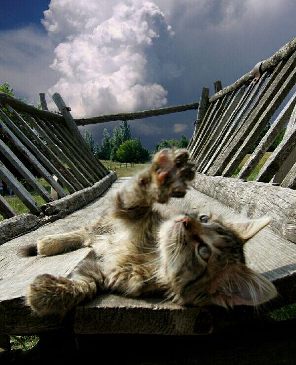 可愛い,猫,画像,貼っていく007