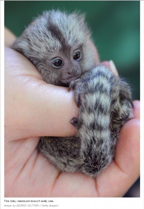 可愛い,動物,赤ちゃん,画像,貼っていく007