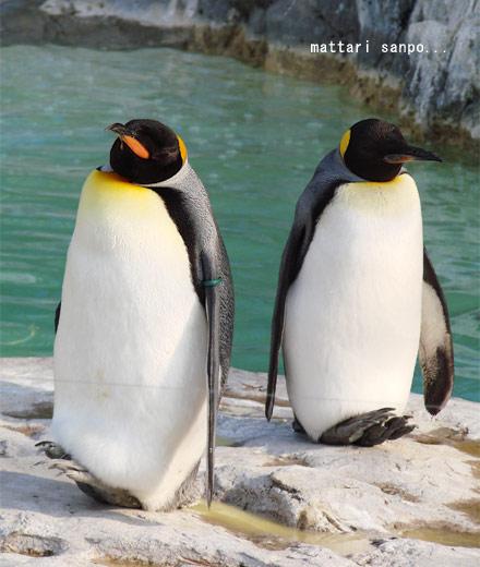 可愛く,悶える,ペンギン,画像,貼っていく007