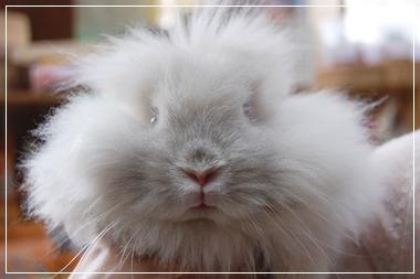 萌え,悶え,可愛すぎ,ウサギ,画像,貼っていく007