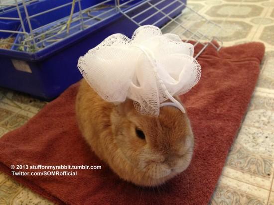 頭の上,物,載せている,ウサギ,可愛すぎる,画像,貼っていく008