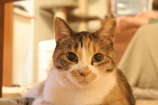 可愛い,猫,画像,貼っていく008