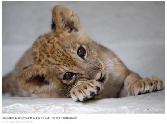 可愛い,動物,赤ちゃん,画像,貼っていく008