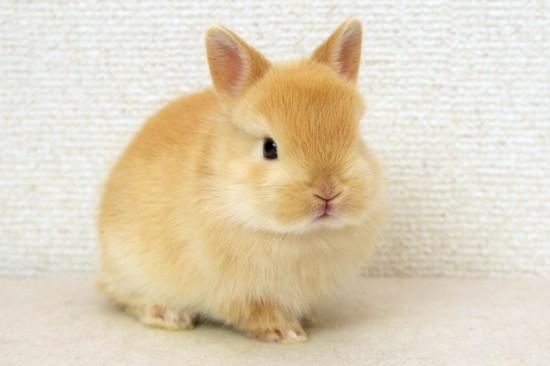 萌え,悶え,可愛すぎ,ウサギ,画像,貼っていく008