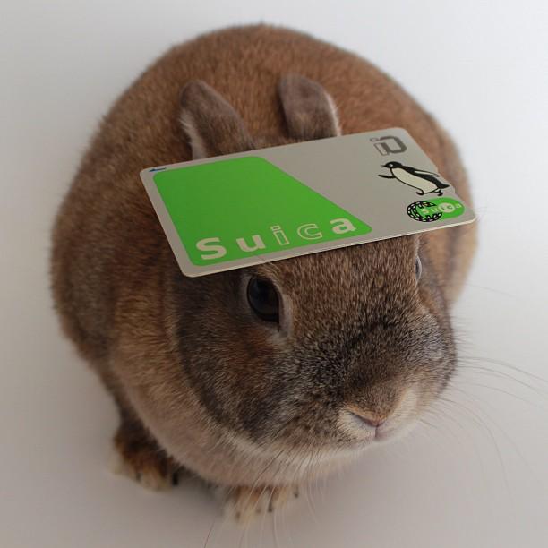 頭の上,物,載せている,ウサギ,可愛すぎる,画像,貼っていく009