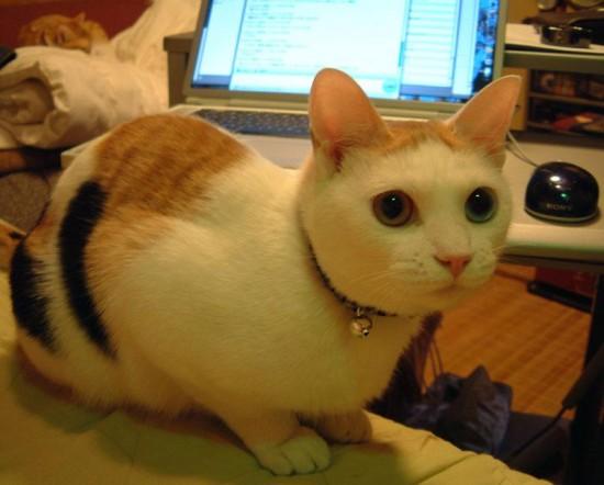 可愛い,猫,画像,貼っていく009