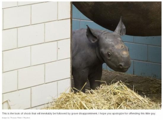 可愛い,動物,赤ちゃん,画像,貼っていく009