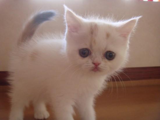 ちょっぴり,ぶち,可愛,猫,画像,貼っていく009