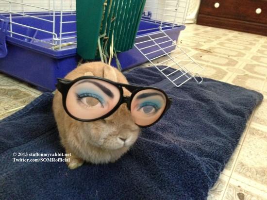 頭の上,物,載せている,ウサギ,可愛すぎる,画像,貼っていく010