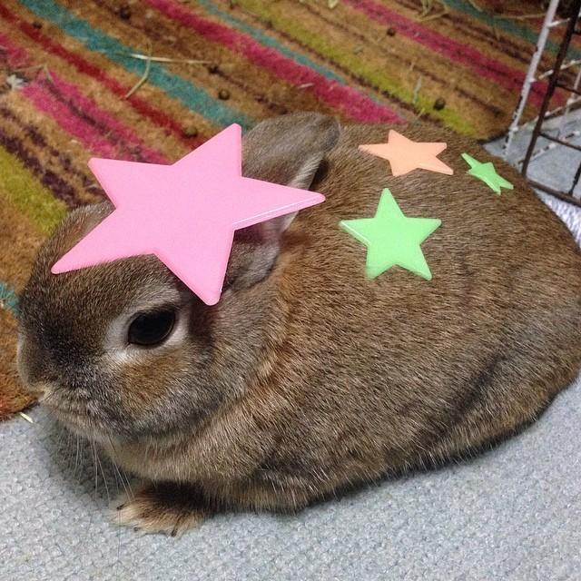 頭の上,物,載せている,ウサギ,可愛すぎる,画像,貼っていく011