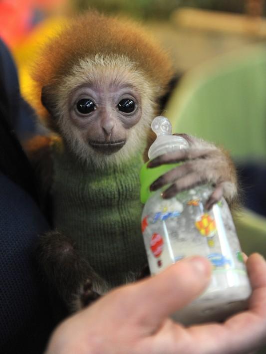 可愛い,動物,赤ちゃん,画像,貼っていく011