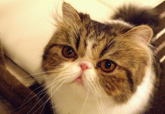 ちょっぴり,ぶち,可愛,猫,画像,貼っていく011