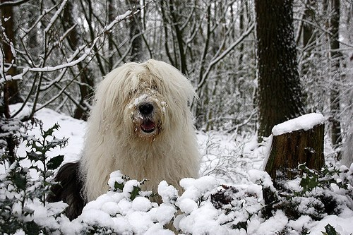 思わず,笑,可愛い,犬,画像,貼っていく011