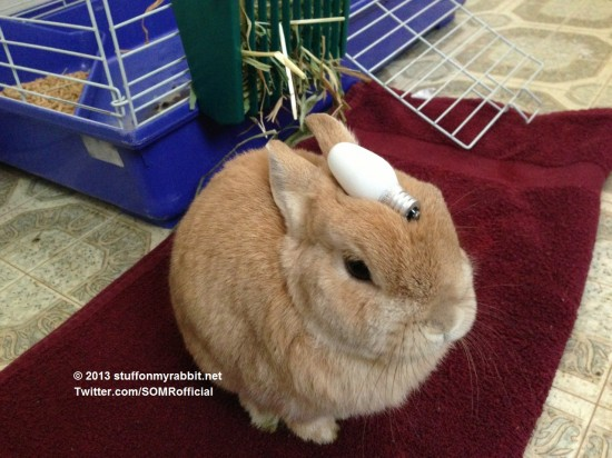 頭の上,物,載せている,ウサギ,可愛すぎる,画像,貼っていく012