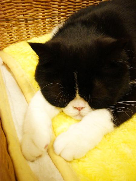 ちょっぴり,ぶち,可愛,猫,画像,貼っていく012