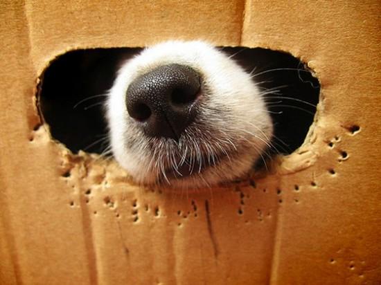 思わず,笑,可愛い,犬,画像,貼っていく012