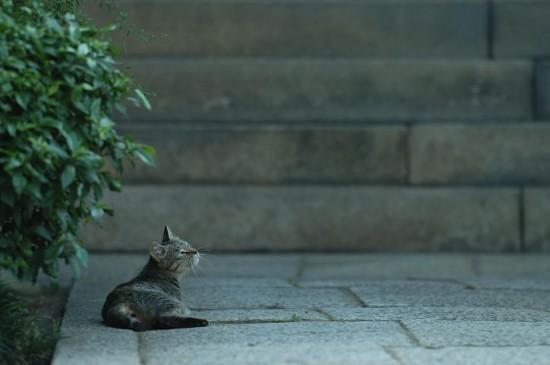 可愛い,猫,画像,貼っていく013