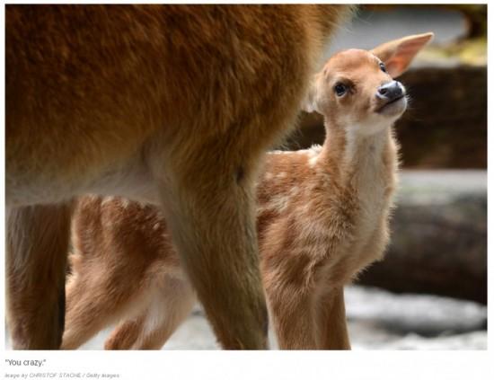 可愛い,動物,赤ちゃん,画像,貼っていく013