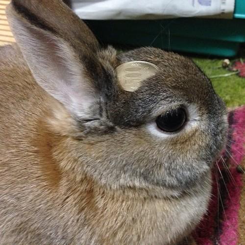 頭の上,物,載せている,ウサギ,可愛すぎる,画像,貼っていく013