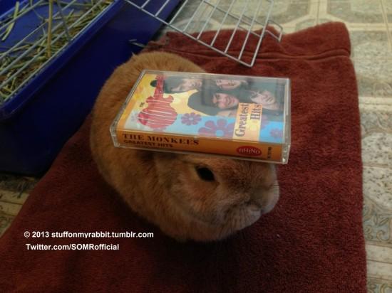 頭の上,物,載せている,ウサギ,可愛すぎる,画像,貼っていく014