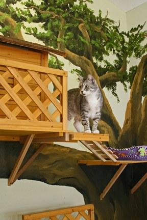 猫,素敵,部屋,画像,貼っていく016