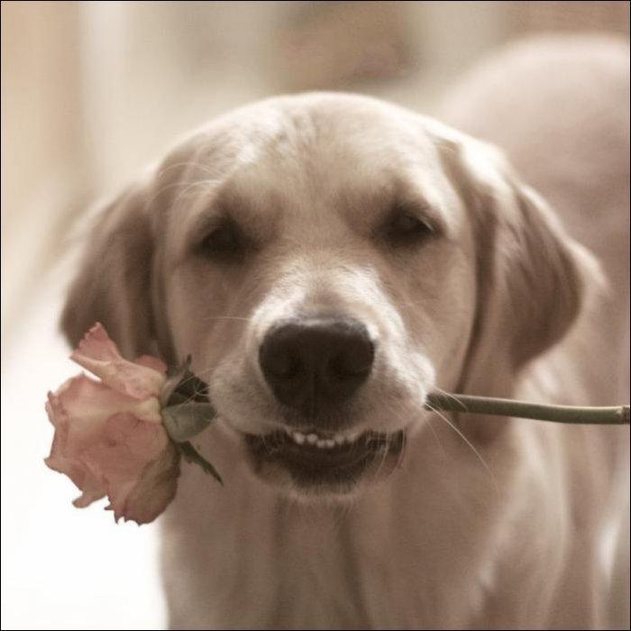 可愛い,犬,猫,画像,貼っていく001