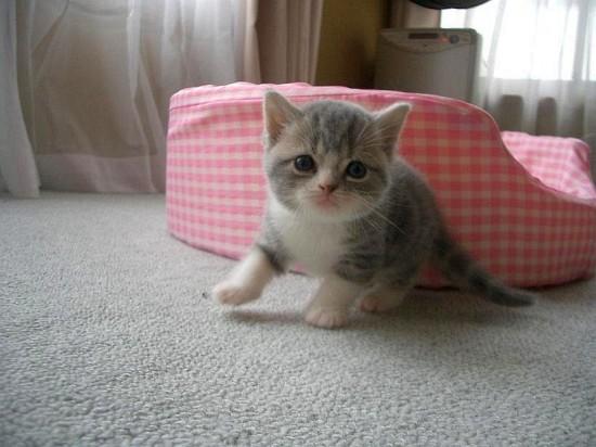 猫,画像,まとめ002