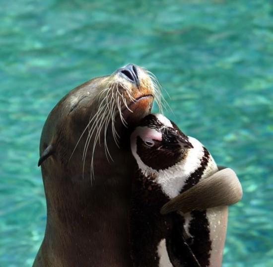 可愛い,動物,癒し,画像,まとめ002