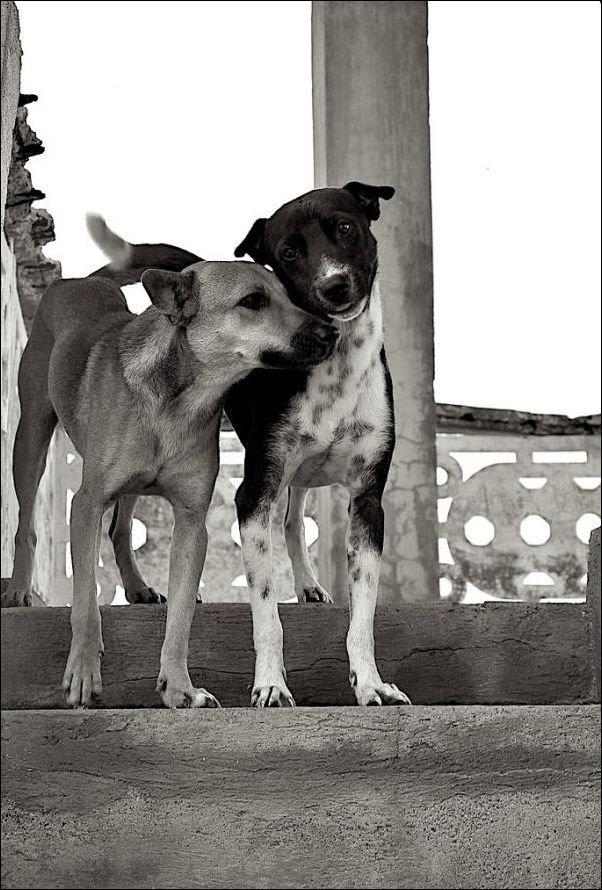 可愛い,犬,猫,画像,貼っていく004