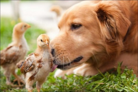 可愛い,犬,猫,画像,貼っていく008